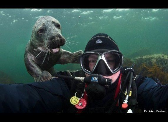 We're assuming that this guy was attempting to take an underwater selfie.