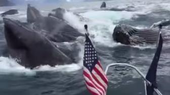 Two fishermen in Alaska lose it when pod of whales feed right next to their boat