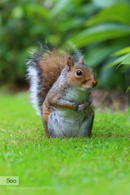 We Regret To Inform You The '2-Foot Tall' Squirrel Is Not