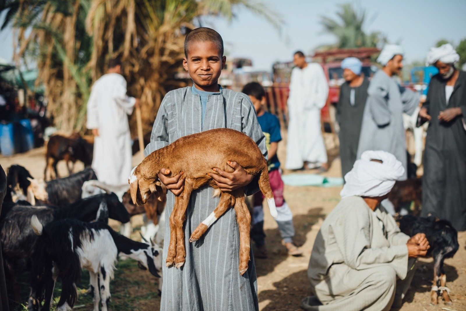 A young boy carries a goat in the Saturday market at Sayala, known as Kalabsha market in Kom Umbo. People usually buy their f