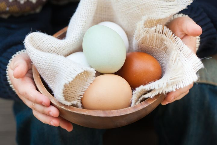 different breeds eggs in a...