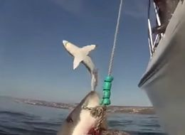 Leaping Shark Just Wants In On The Fun