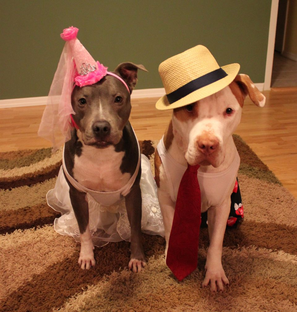"""Bans and restrictions on pit bull ownership are called """"breed-specific legislation"""" -- and the studies that have looked at th"""