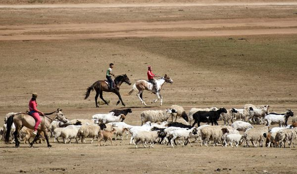 Purevsurengiin passing a herd of sheep as he rides his horse next to a friend.