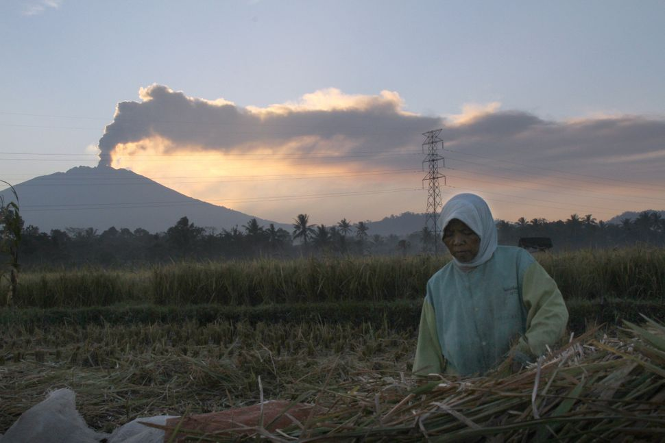 <p>An Indonesian farmer works on a farm at dawn while the 3,300-metre (10,800-foot) Mount Raung volcano emits a column of ash and steam as seen from Jember district, located in eastern Java island on July 12, 2015. Ash spewing from the Indonesian volcano closed the airport again on neighbouring Bali on July 12 just a day after it reopened, causing fresh travel chaos for weary holidaymakers stranded on the resort island. AFP PHOTO (Photo credit should read STR/AFP/Getty Images)</p>