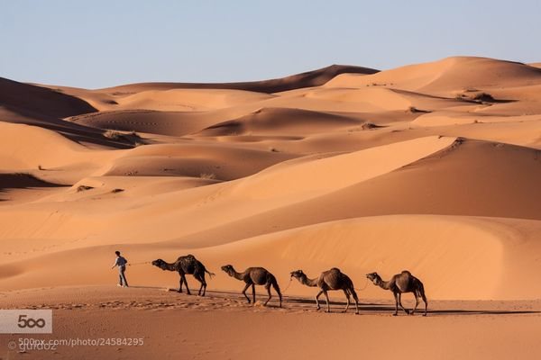 Reader Brenda English would love to take a photography safari in the beautiful desert.