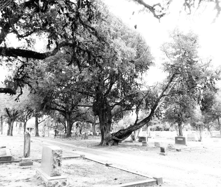 Hempstead, Waller County's seat, was accused of purposefully not upkeeping historically black cemeteries, such as this one.&n