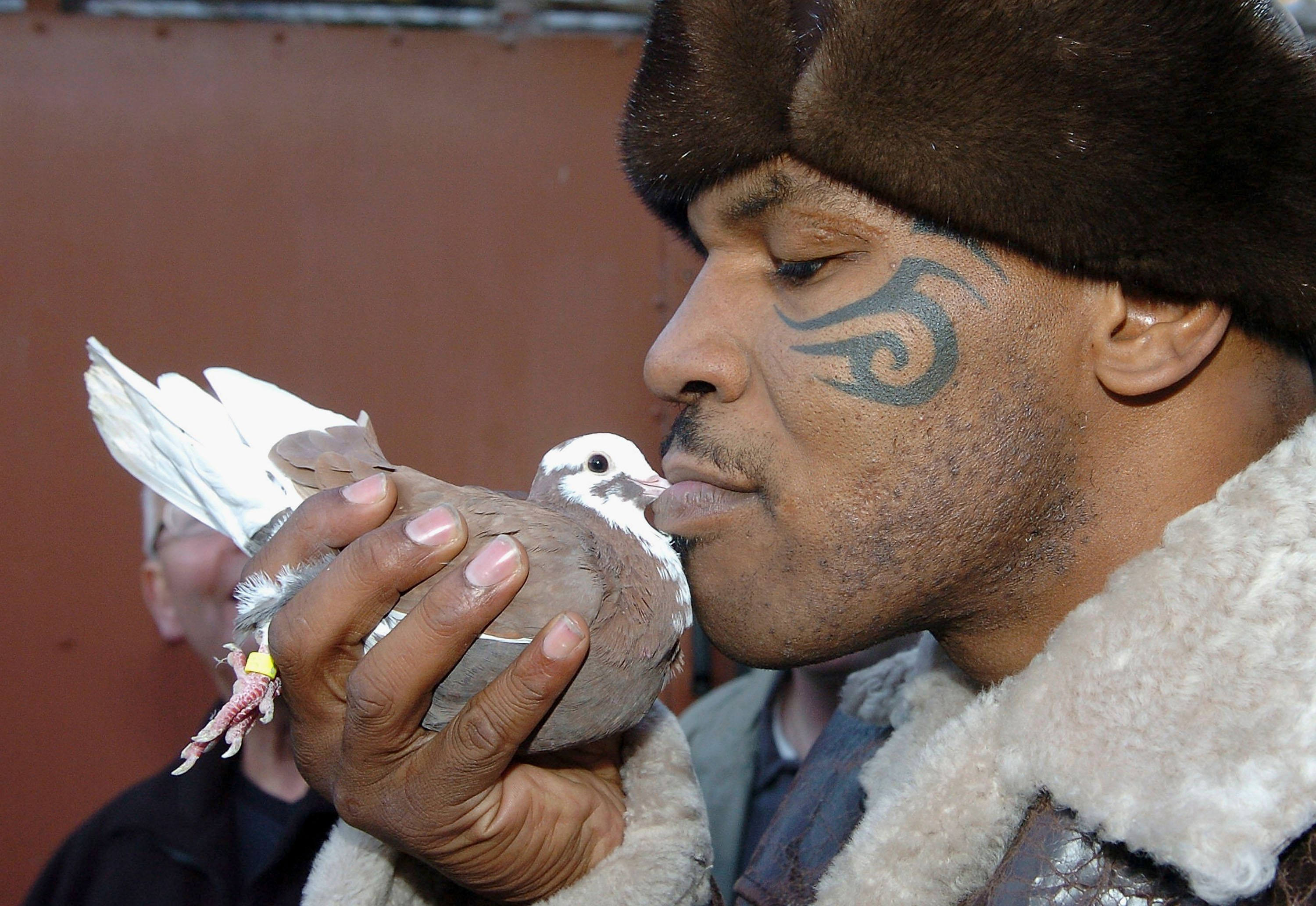 WALSALL, UNITED KINGDOM - NOVEMBER 18:  Former world heavyweight boxing champion Mike Tyson meets up with a pigeon fancier Horace Potts (L), of Bloxwich, Walsall, West Midlands on November 18, 2005 in Walsall, England. Tyson who is well known for his love of pigeons dropped in to the home of pigeon fancier Horace Watts whilst on route to Birmingham, England, for a hotel dinner boxing event.  (Photo by Stringer/Getty Images)