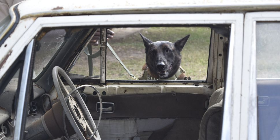 The African Wildlife Foundation has trained 10 dogs and 14 handlers to detect smuggled ivory at ports in Kenya and Tanzania.