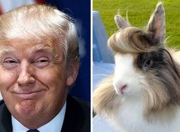15 Things That Look Like Donald Trump