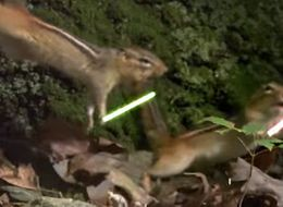 Jedi Chipmunks Fight With Lightsabers, Universe Wins