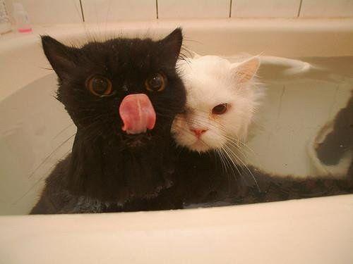 Don't ever make us take a bath again.