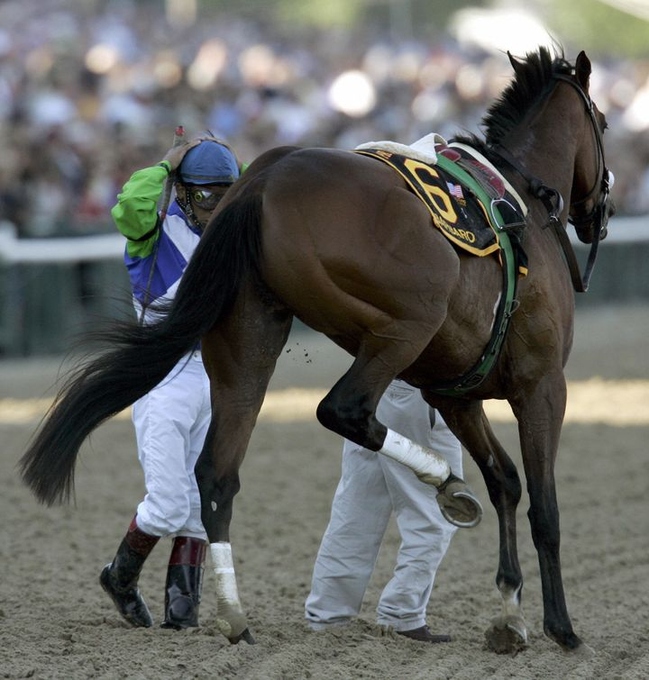 Kentucky Derby winner Barbaro broke his leg at the first turn of the Preakness Stakes in May 2006. Despit