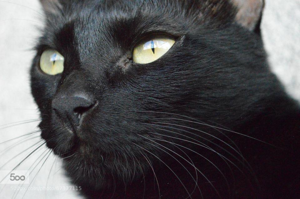 My sister's black cat gazing at something