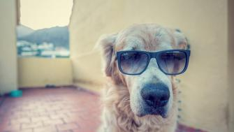 I'm a very funny dog but if I wear my sunglasses.... :D