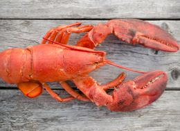 The (Most) Humane Way To Kill A Lobster