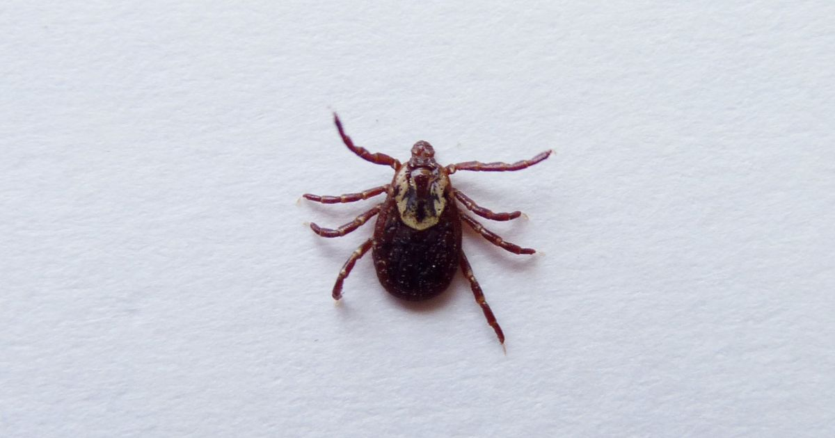 heres what you need to know about ticks