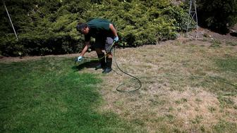 NOVATO, CA - MAY 29:  Brown Lawns Green owner Bill Schaffer applies green paint to a brown lawn on May 29, 2015 in Novato, California. As the severe California drought continues to worsen, homeowners and businesses looking to conserve water are letting lawns go dormant and are having them painted to look green. The paint lasts eigh weeks on dormant lawns and will not wash off.  (Photo by Justin Sullivan/Getty Images)