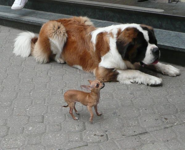 What Breed Of Dog Is Called The Babysitter | Dog Breeds Picture