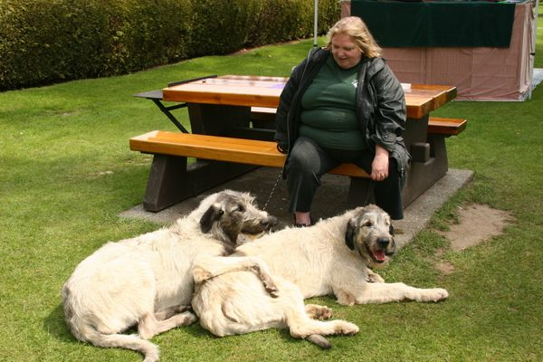 "What's bigger than an Irish Wolfhound? Two Irish Wolfhounds! These scraggly-haired pups <a href=""http://www.akc.org/dog-breed"