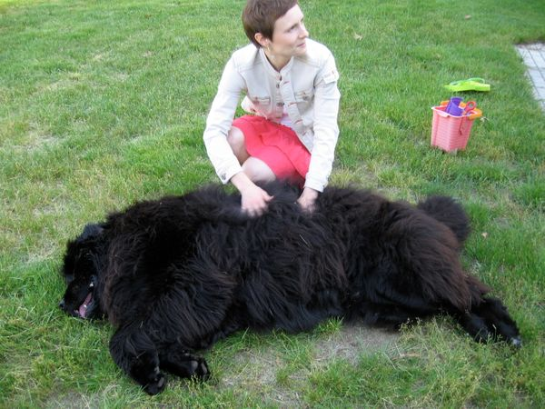Newfies are super sweet and wildly warm; they've got a thick, heavy coat that sheds <em>everywhere</em>. These big-boned beau