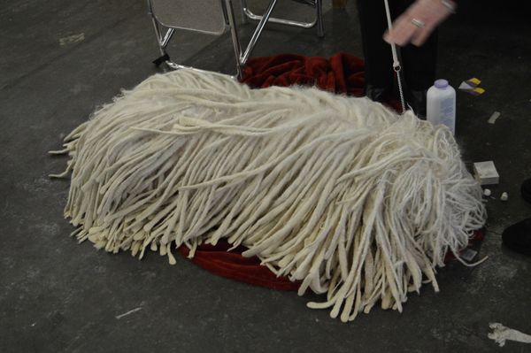 No, that's not a giant mop pictured above. Meet the Komondor, a brave and dignified breed that probably doesn't care if you m