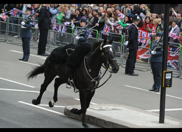 A horse, without a rider, gallops along the processional route during the royal wedding. (Getty photo)
