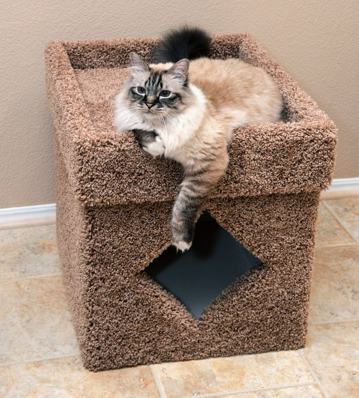 Gift your pet with a scratcher potty.