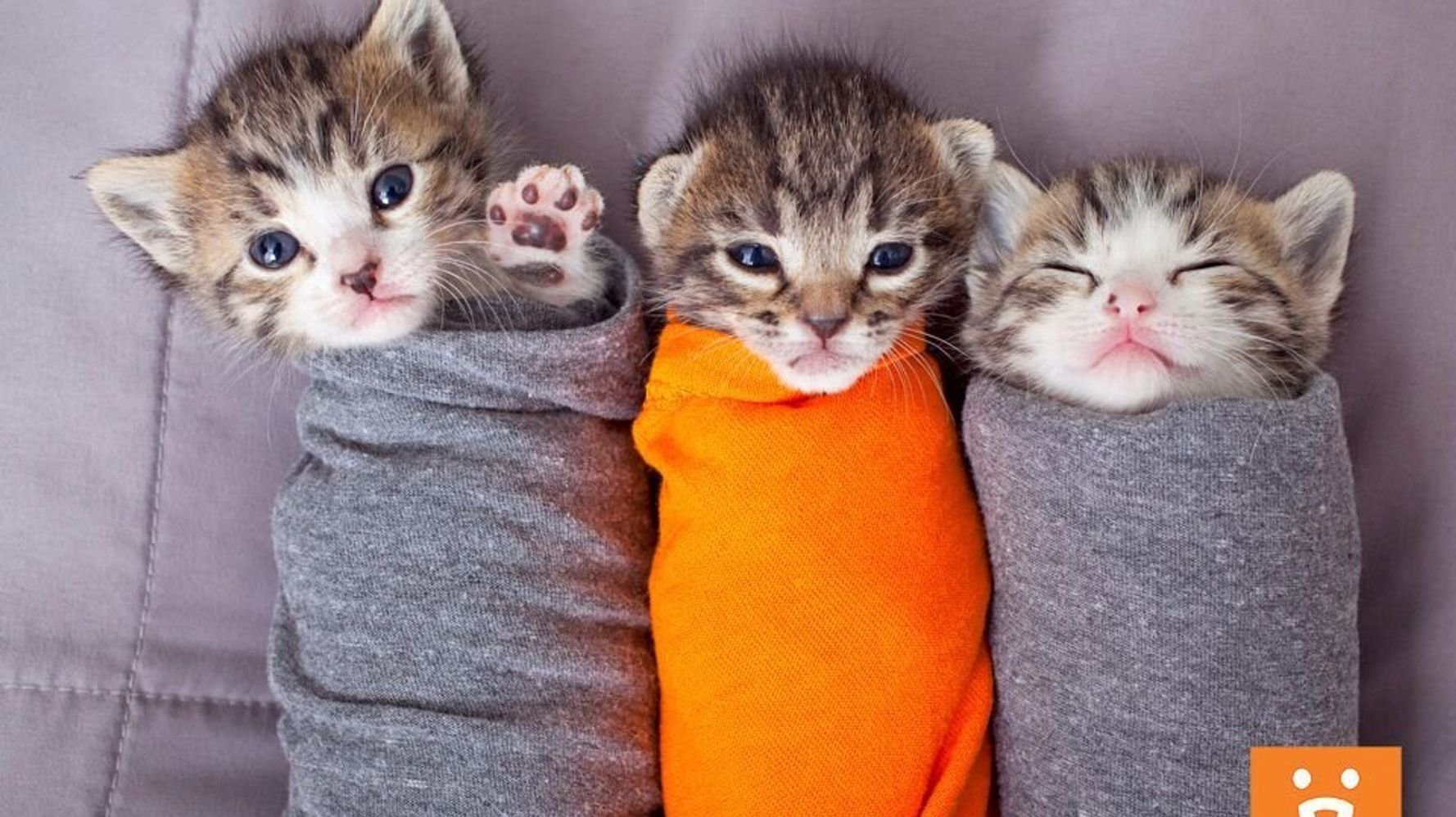 Help Shelter Cats As A Volunteer Snuggler At These Kitten Nurseries Huffpost
