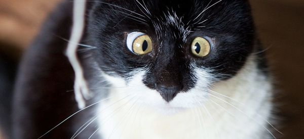 Ozzy The Cat Has Crossed Eyes, But We Think He's Purrrfect
