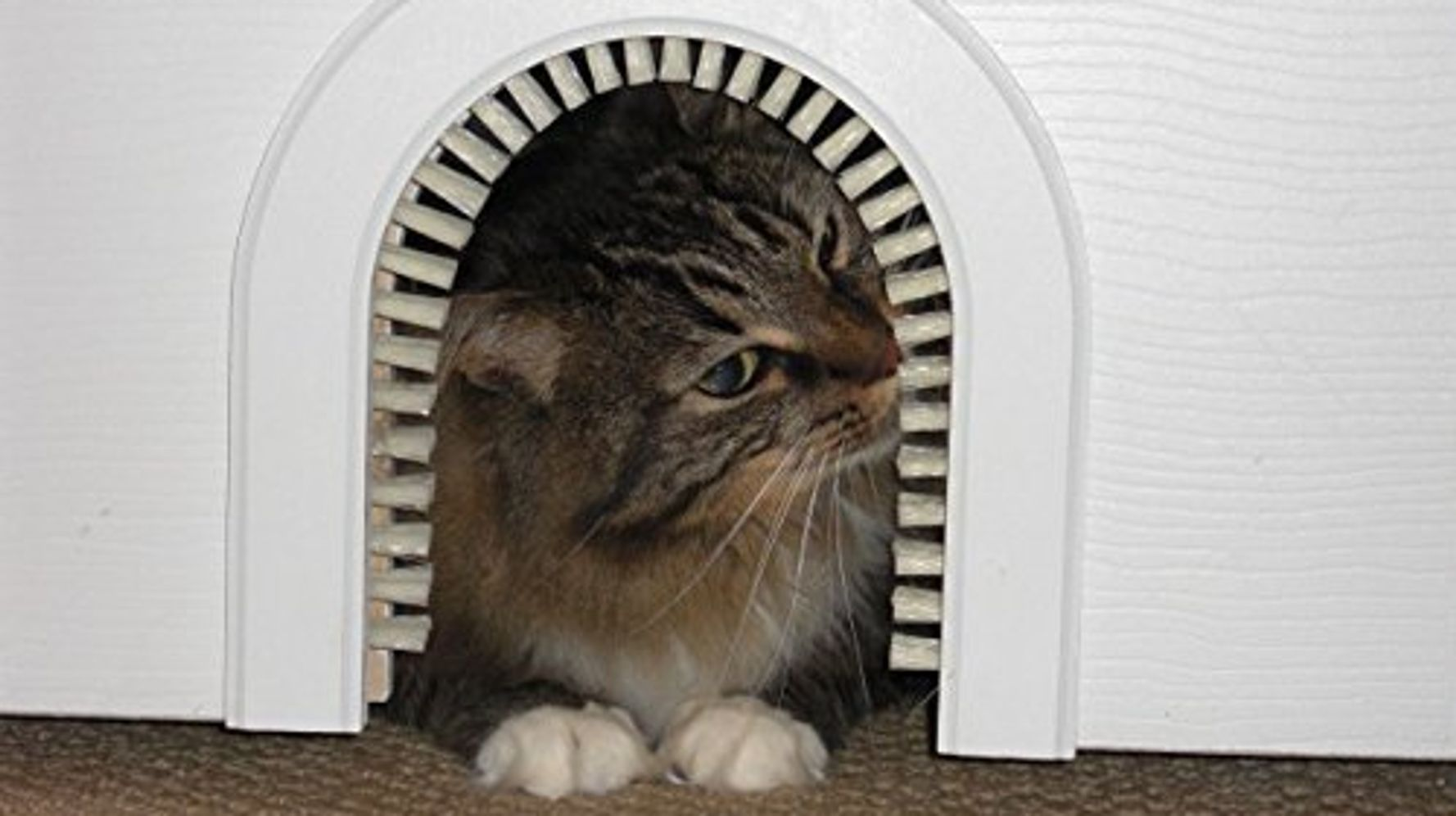 8 Handsome Ways To Hide Your Cat's Litter Box   HuffPost Life