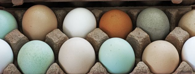Are Farmers Market Eggs Really Worth It, And Do They Taste Better?...