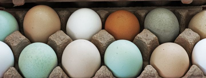 <p>Happier, healthier chickens often make eggs that taste better than those from factory farms.</p>