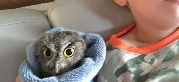 Boy Watches Owls On TV, Real Owl Shows Up To Join Him