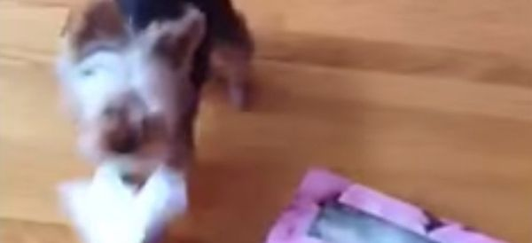 Watch Adorable Animals Sneeze And Your Day Will Instantly Improve