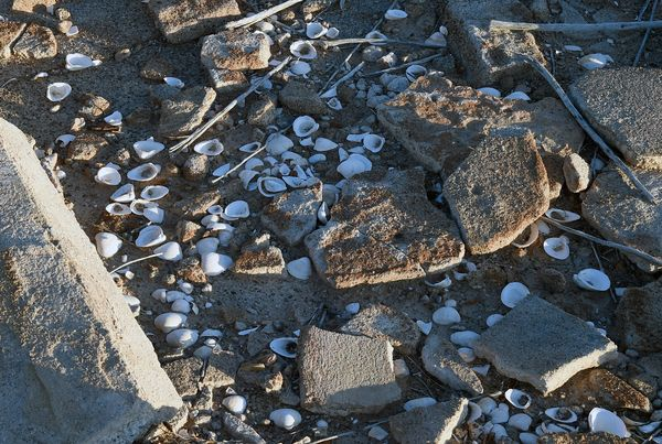 Mussel shells are shown among the ruins of a structure in the ghost town on August 3, 2015 of St. Thomas in the Lake Mead Nat