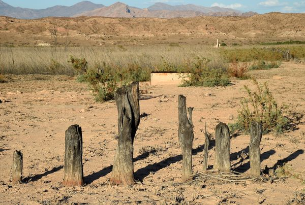 Tree stumps used as a boundary marker are shown in the ghost town of St. Thomas on August 3, 2015 in the Lake Mead National R