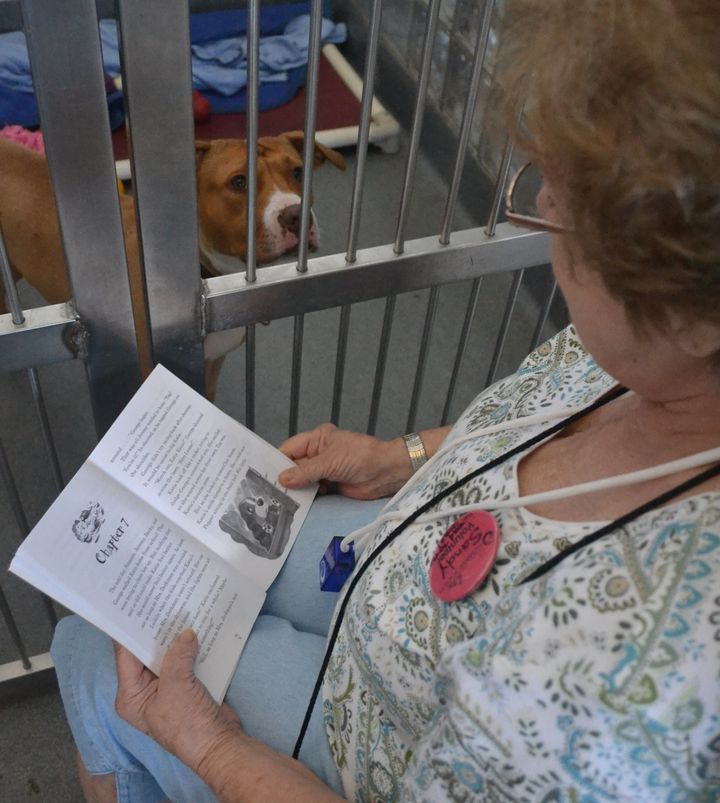 <p>Sandy Barbabella reads to dogs at her local shelter every week.</p>
