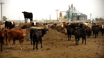 One source of renewable energy Fowler will be using is Anaerobic Digester that will use gasses from manure at the Rocky Ford Feed Yard. Joe Amon, The Denver Post  (Photo By Joe Amon/The Denver Post via Getty Images)