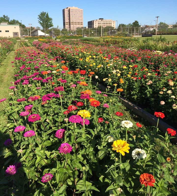 The flower garden at Cook County Jail allows participating inmates to help grow blooms that are sold to local vendors, includ