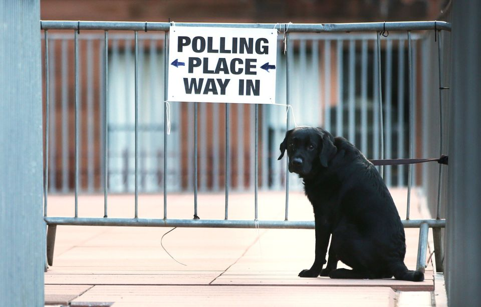 A dog is tied to railings at a polling station in Glasgow, Scotland, on May 7, 2015, as Britain holds a general election. Pol