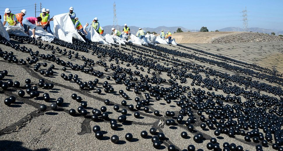 LADWP employees release the shade balls.