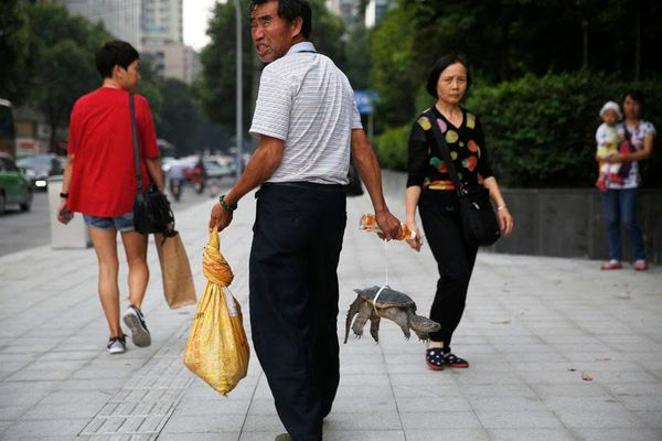 A man walks with his turtle on a busy commercial street in Chengdu, Sichuan Province, China.