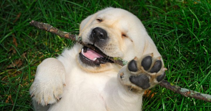 This puppy is happy about the ruling.
