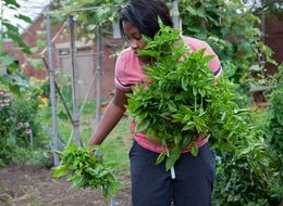 School And Community Gardens Teach Urban Students To Thrive