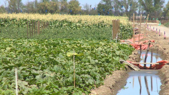 Agrihoods Offer Suburban Living Built Around Community Farms Not