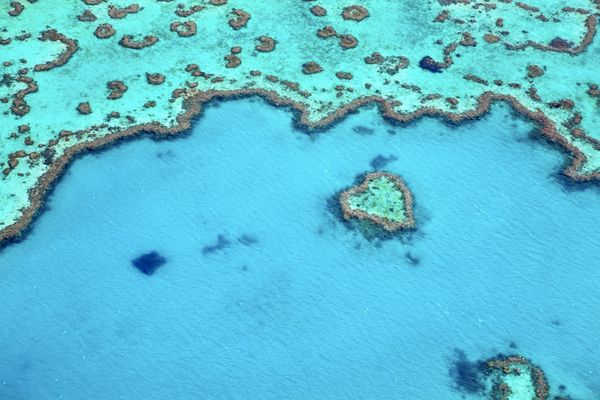 Stretching more than 1,860 miles up the northeastern coast of Australia, it's home to the world's largest network