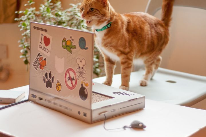 Cat Scratch Laptop Is The Purr Fect Toy For Kitties Who