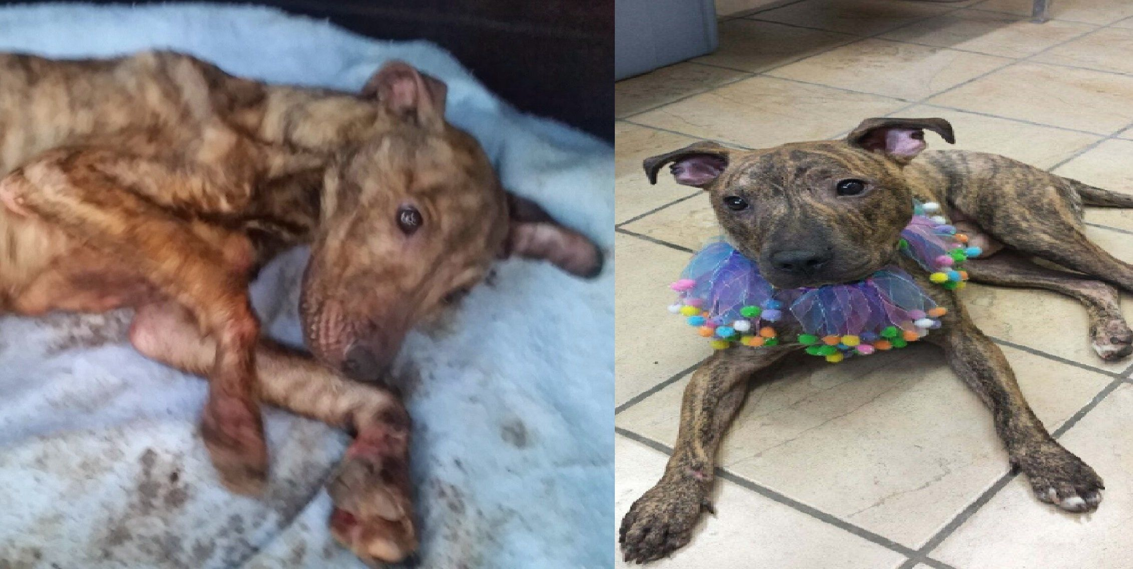 Rocky before (left) and after his rescue.