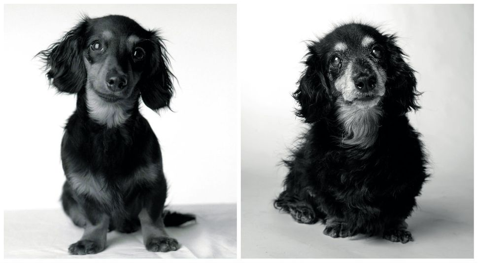 Left: Lily at 8 months old. Right: Lily at 15 years old.